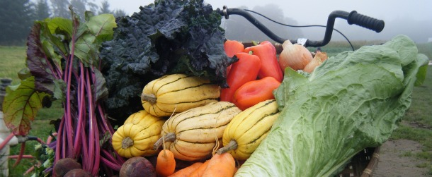 Fall vegetable selection from Sauvie Island Organics