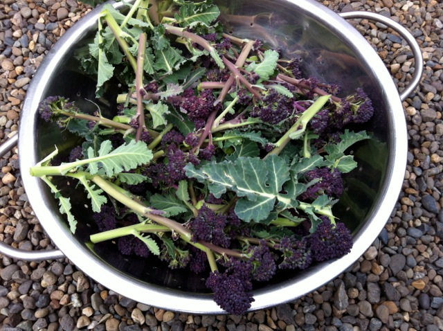 how to cook purple sprouting broccoli in microwave